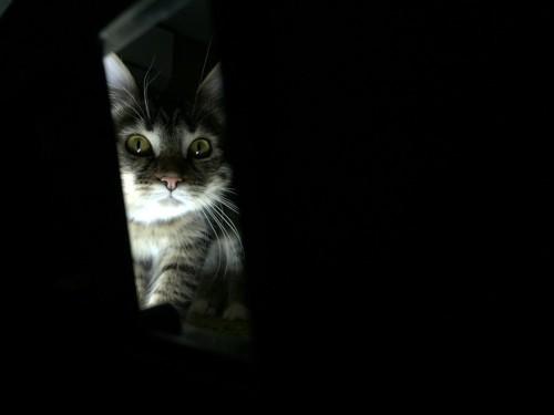 暗闇で隠れている猫