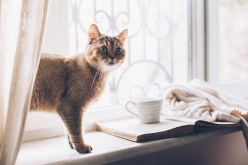 様子を伺う猫