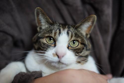 抱かれて上に目を向ける猫