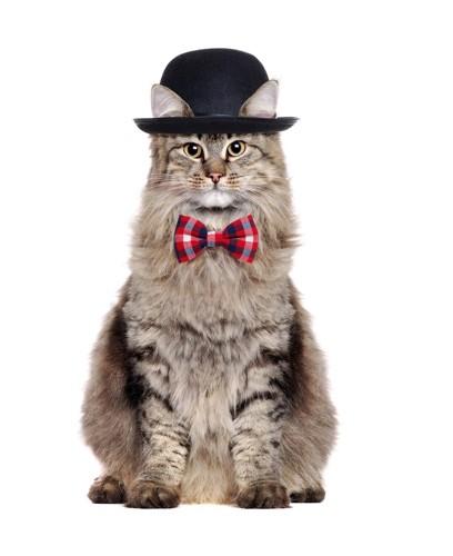 紳士な服の猫