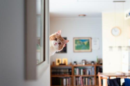 ひょっこり覗く猫
