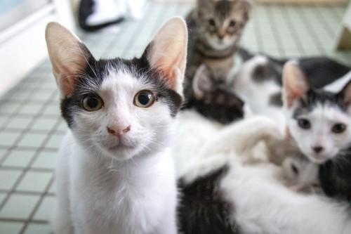 室内の保護猫