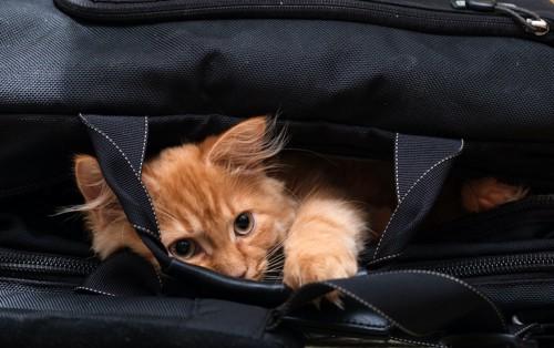 カバンに入って寛ぐ猫
