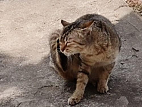 猫が一匹頭を掻いている写真