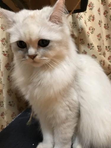 不安気な猫