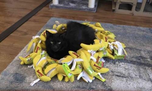 バナナの上に座る黒猫
