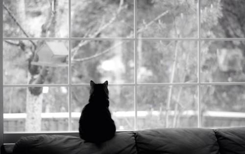 窓辺で外を眺める猫の後ろ姿
