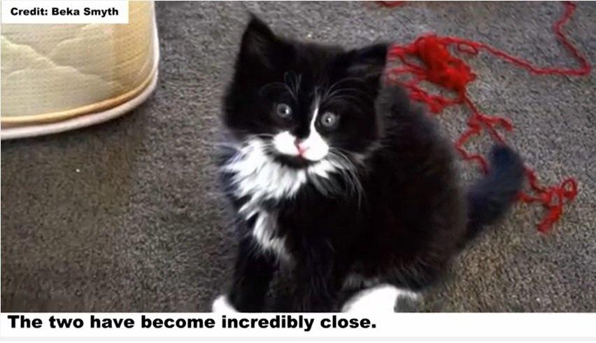 タキシード猫