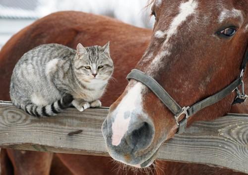 からだを寄せ合う猫と馬