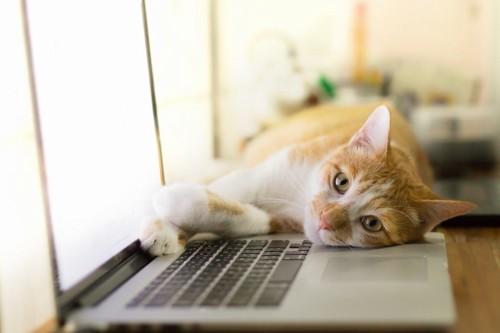 パソコンの上に寝る猫