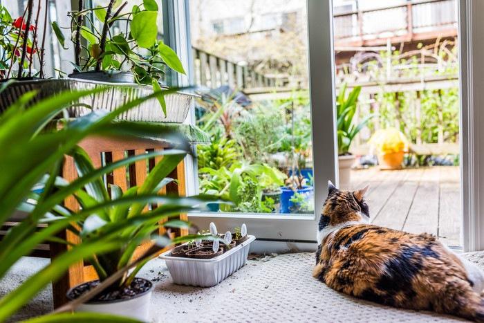 外を眺めている猫