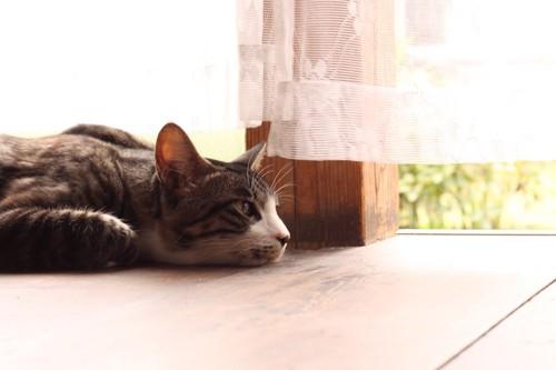 縁側でくつろぐ猫