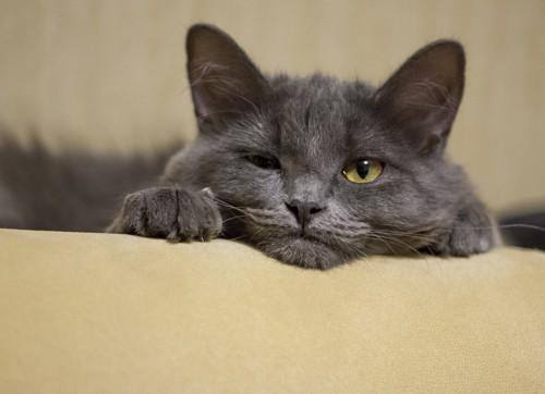 苦手が顔に出てる猫