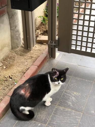 やけどをした白黒猫