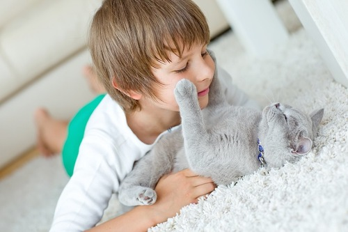 グレーの猫と遊ぶ男の子