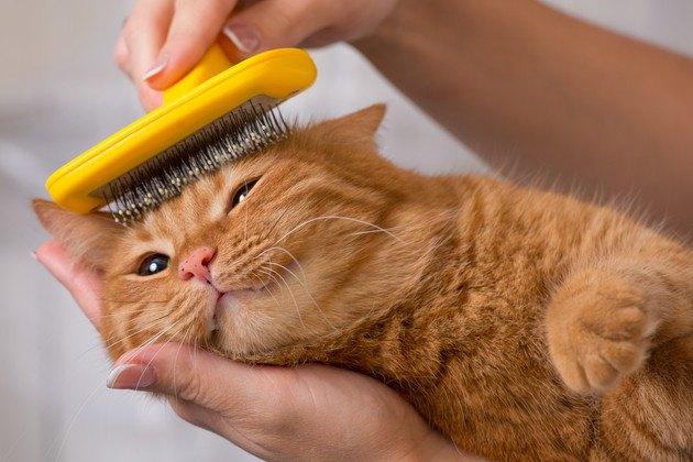 フーリーのようなブラシで毛をとかれている猫