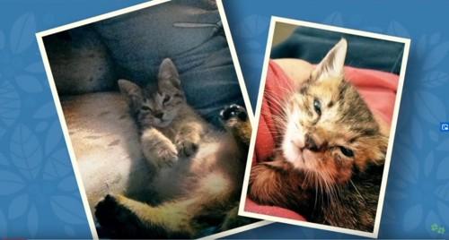 2枚の子猫の写真