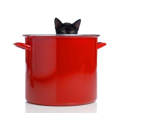 赤い鍋と猫