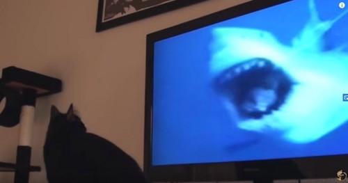 テレビ画面にサメ