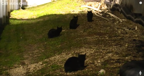 3匹の黒猫