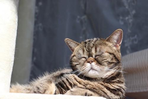 目をつぶる猫