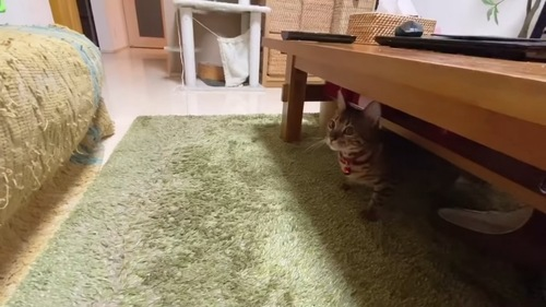 机の下にいる猫