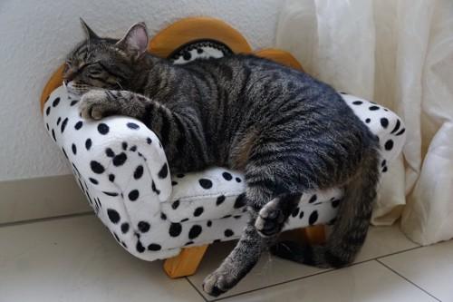 猫用のソファーで眠る猫