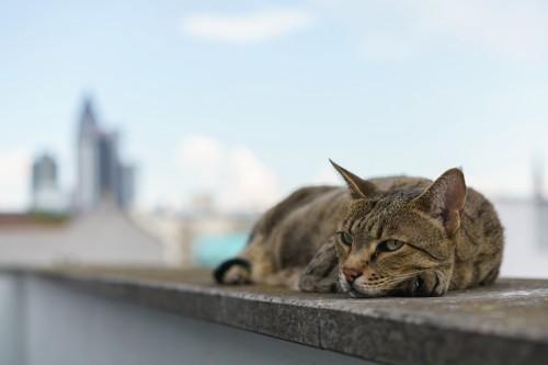 街中でくつろぐ猫