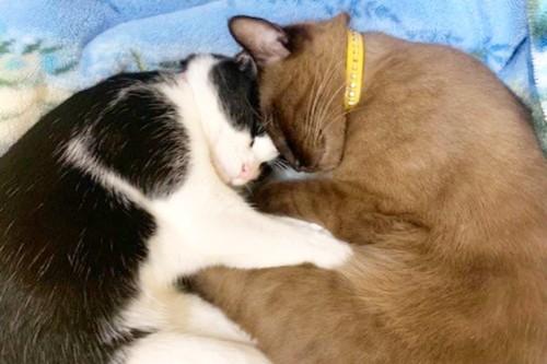 現在の2匹。いまでも一緒に寝るぐらい仲良し