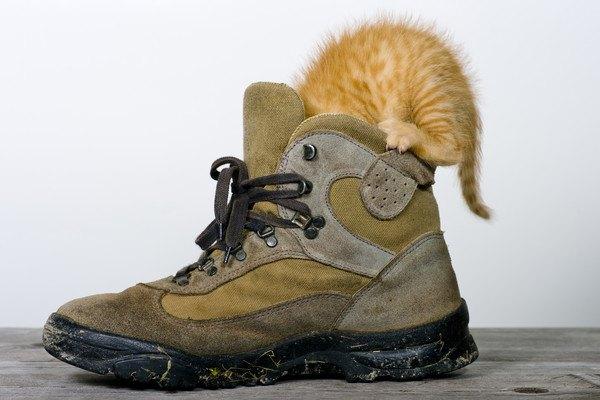 靴に顔を突っ込む猫
