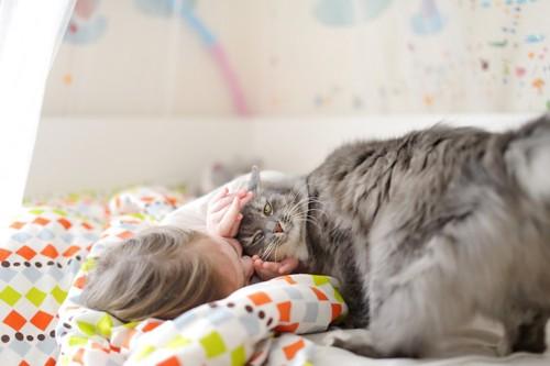 子供を起こす猫