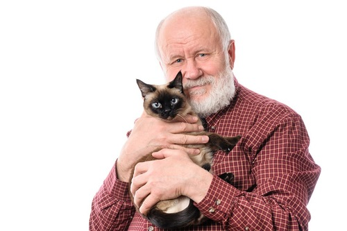 おじいさんとシャム猫