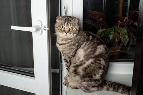 ドアを開けた猫