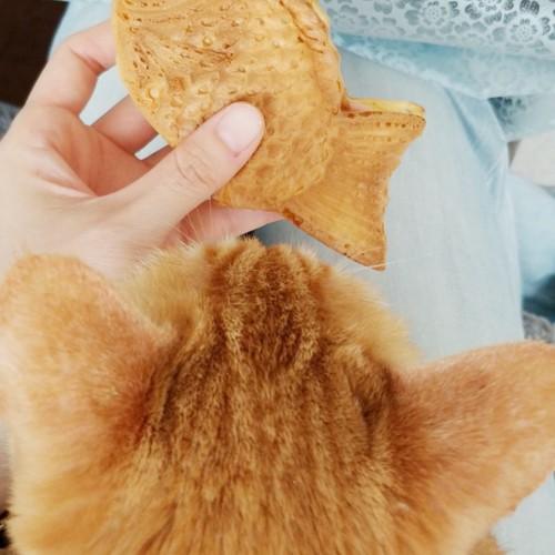 ︰猫の後ろ姿とたい焼き