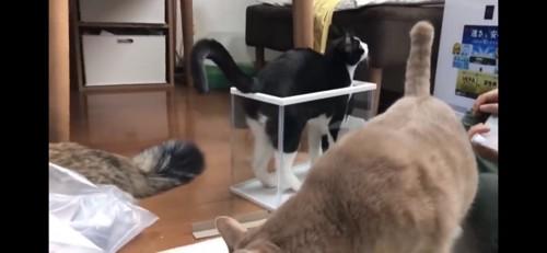 プラケースに入る猫