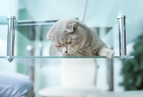 ガラステーブルの上から下を覗く猫