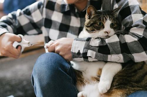飼い主に抱っこされて爪を切られる猫