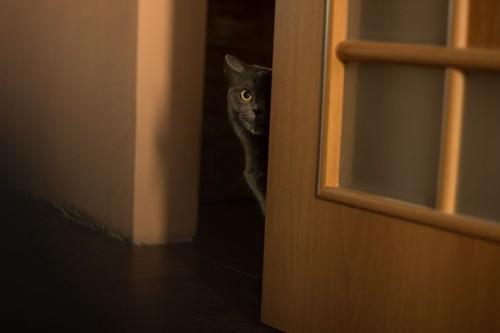 開いているドアから顔を出す猫