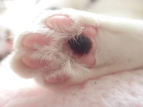 ピンク色と黒色の猫の肉球