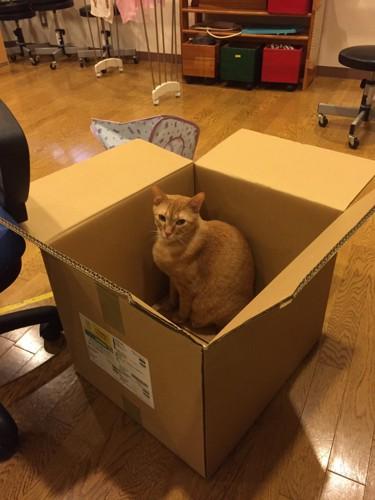 茶色の猫がダンボールに入っている