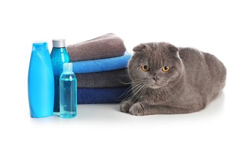 シャンプーとタオルと猫