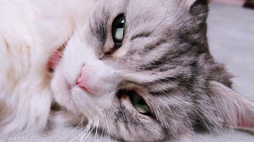 寝ながら目だけ横の方を見る猫