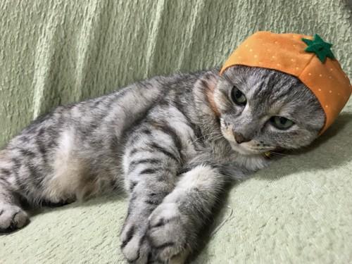 みかんのかぶりもの、猫1匹