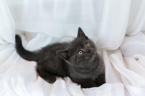 上を見つめている子猫