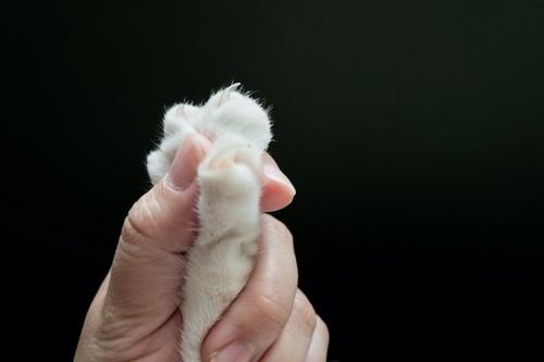 人の手に握られている猫の手