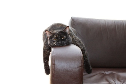 ソファの肘置きに眠る猫