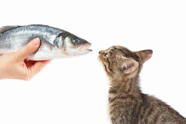 魚を与えられる子猫