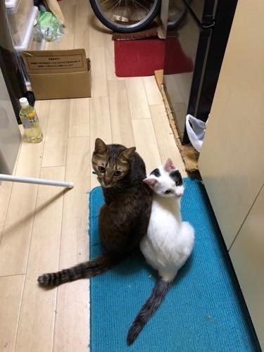 キッチンマットに座る二匹の猫