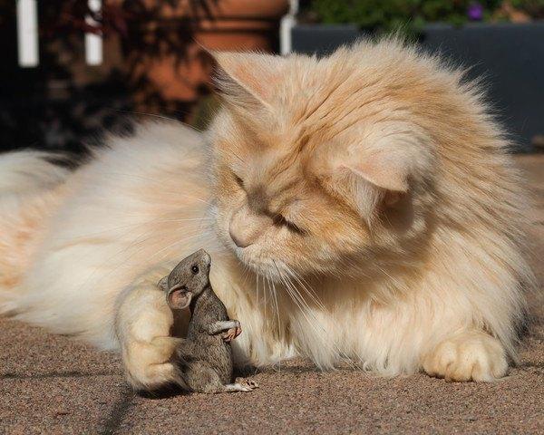 鼠に手をかける猫