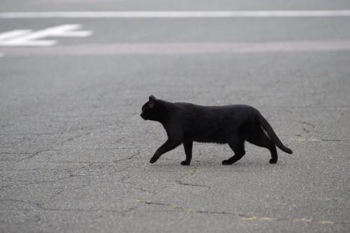 道路を歩いている黒猫